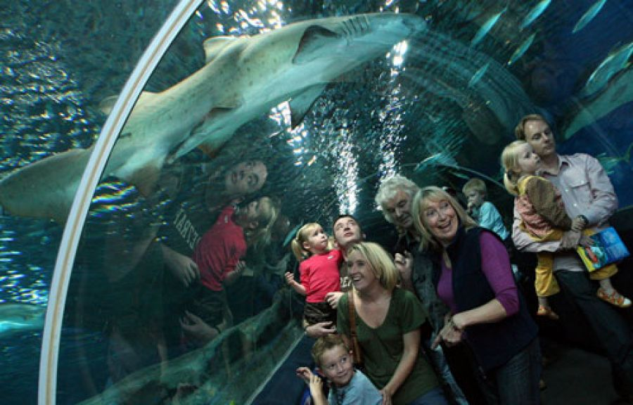 Blue Planet Aquarium - Ellesmere Port - image 0